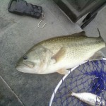 6.6lbs largemouth