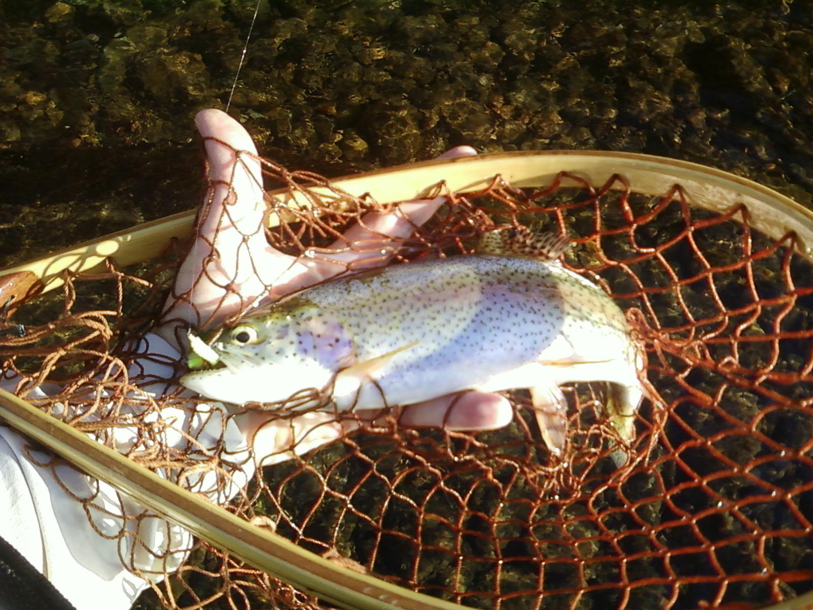 October journal tnfishingreport for Twra fishing report