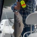 TSF 1-23-2012-2