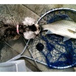 9-22-2012 pup inspecting fish