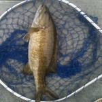 Smallmouth 7-13-2012