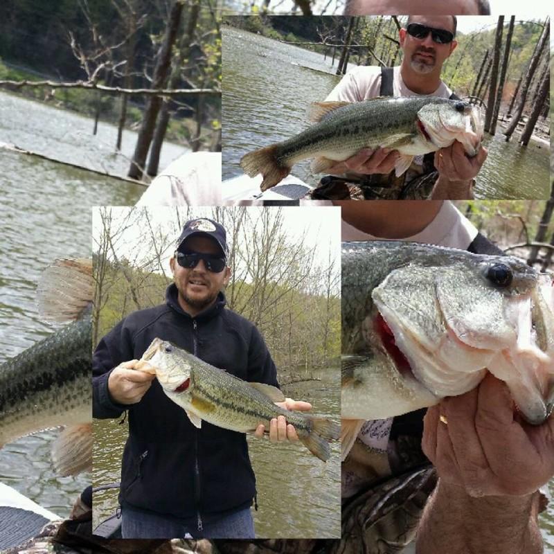 Watauga Lake Fishing Watauga Lake Both 3 9lbs